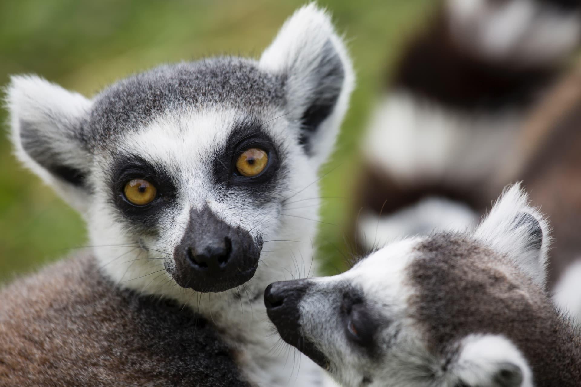 Незабравима почивка и екскурзия в Мадагаскар